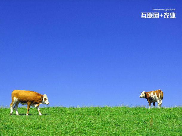 互联网农牧产业